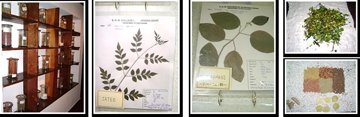 南インドでは1つ1つのハーブ、薬草の効果をしっかり学びました。
